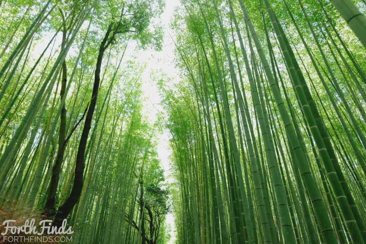 bamboo-groves-3