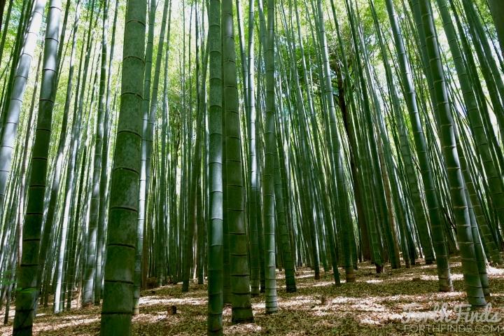 inside-the-arashiyama-bamboos